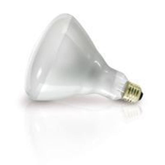 Picture of Light Bulbs Incandescents R40 Heat Lamp 125W medium 125R40 CL 12ML